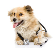 Dog with a stethoscope on his neck. isolated on wh Stock Photography