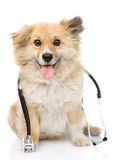 Dog with a stethoscope on his neck.  on white back Royalty Free Stock Photos