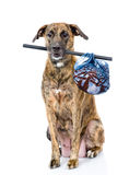 Dog with a stick and a bag.  on white background Royalty Free Stock Images