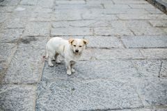 The dog in the stone road. Dog walking along the stone road Stock Images
