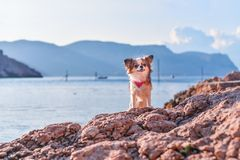 A dog on a stone by the sea Royalty Free Stock Photo