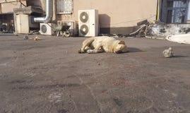 Dog. Stray dog sleeping in a city street Royalty Free Stock Photography