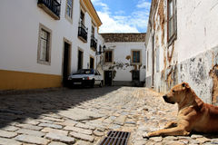 Dog on street royalty free stock images