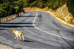Dog on the street. A stray on a coast road next to Sétubal in Portugal Stock Photos