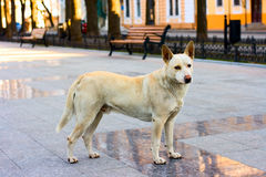 Dog on the street Royalty Free Stock Photos