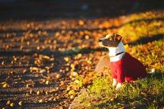 Dog on the street Stock Photos