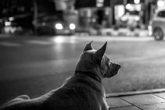The dog on the street ; B&W royalty free stock photography