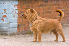 Dog on street corner Stock Photos