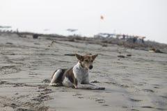 Dog, Street Dog, Beach, Sand Stock Photo