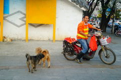 Dog in the street Stock Photo