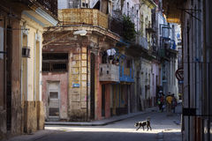 Dog on Street of Havana, Cuba. Royalty Free Stock Photography