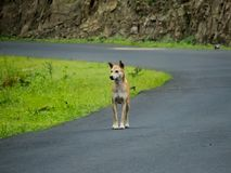 Dog on Street, Looking Away stock photography