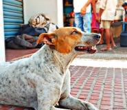 Dog. Street photography emotions happyness Royalty Free Stock Photos