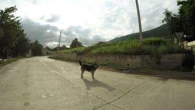 Dog on street stock footage
