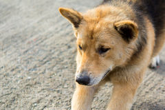 Dog. On the street somewhere in Bangkok Royalty Free Stock Image