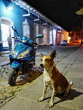 A dog on the street of Trinidad, Cuba. A dog on the street of Trinidad, which is one of the main tourist destinations in Cuba as well as one of the UNESCO Royalty Free Stock Images
