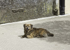 Dog in street Stock Images