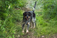 Dog. A streetdog standing on the way in the forest Royalty Free Stock Photos