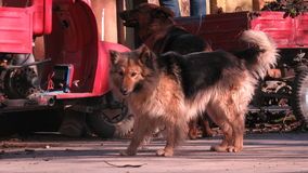 Dog on the streets of Odessa Ukraine Stock Images