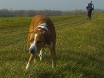 Dog Stretching On Promenade Royalty Free Stock Photo