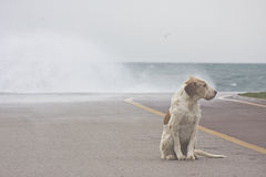 Dog of strom. A lonely street dog is sitting as big waves of storm are beating the dock violently Royalty Free Stock Photos
