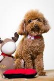 Dog and stuffed animals Stock Photo