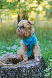 Dog on the stump in the Park Royalty Free Stock Photo