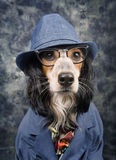 Dog with style Royalty Free Stock Photos