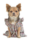 Dog with stylish gown Royalty Free Stock Photography