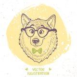 Dog stylish Stock Images