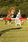 Dog Success Stock Image