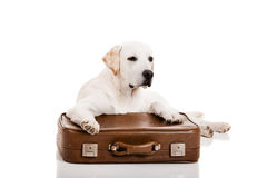 Dog with a suitcase Royalty Free Stock Images