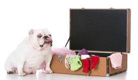 Dog with suitcase Royalty Free Stock Images