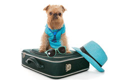 Dog and a suitcase for travel Royalty Free Stock Image