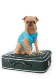 Dog and a suitcase for travel Royalty Free Stock Images