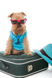 Dog and a suitcase for travel Royalty Free Stock Photo