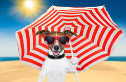 Dog summer Stock Images