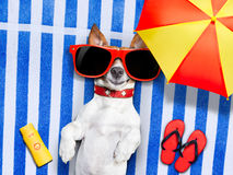 Dog Summer Beach Royalty Free Stock Photography