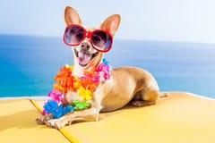 Dog summer beach Royalty Free Stock Photo