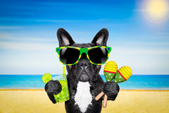 Dog summer beach cocktail Royalty Free Stock Images