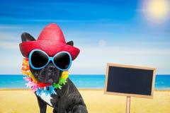 Dog summer beach royalty free stock image