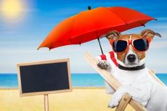 Dog summer beach Stock Photo