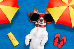 Dog summer beach Royalty Free Stock Images