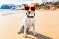 Dog summer. Dog on the beach thinking about life and other things royalty free stock photography