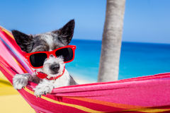 Dog summer hammock Stock Images