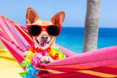 Dog summer hammock Royalty Free Stock Photography