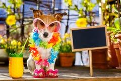 Dog summer holiday vacation on balcony Royalty Free Stock Image