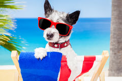 Dog summer holiday vacation Stock Photo