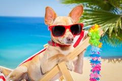 Dog summer holiday vacation Stock Photo