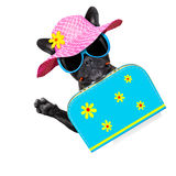 Dog on summer  holiday vacation Royalty Free Stock Photos
